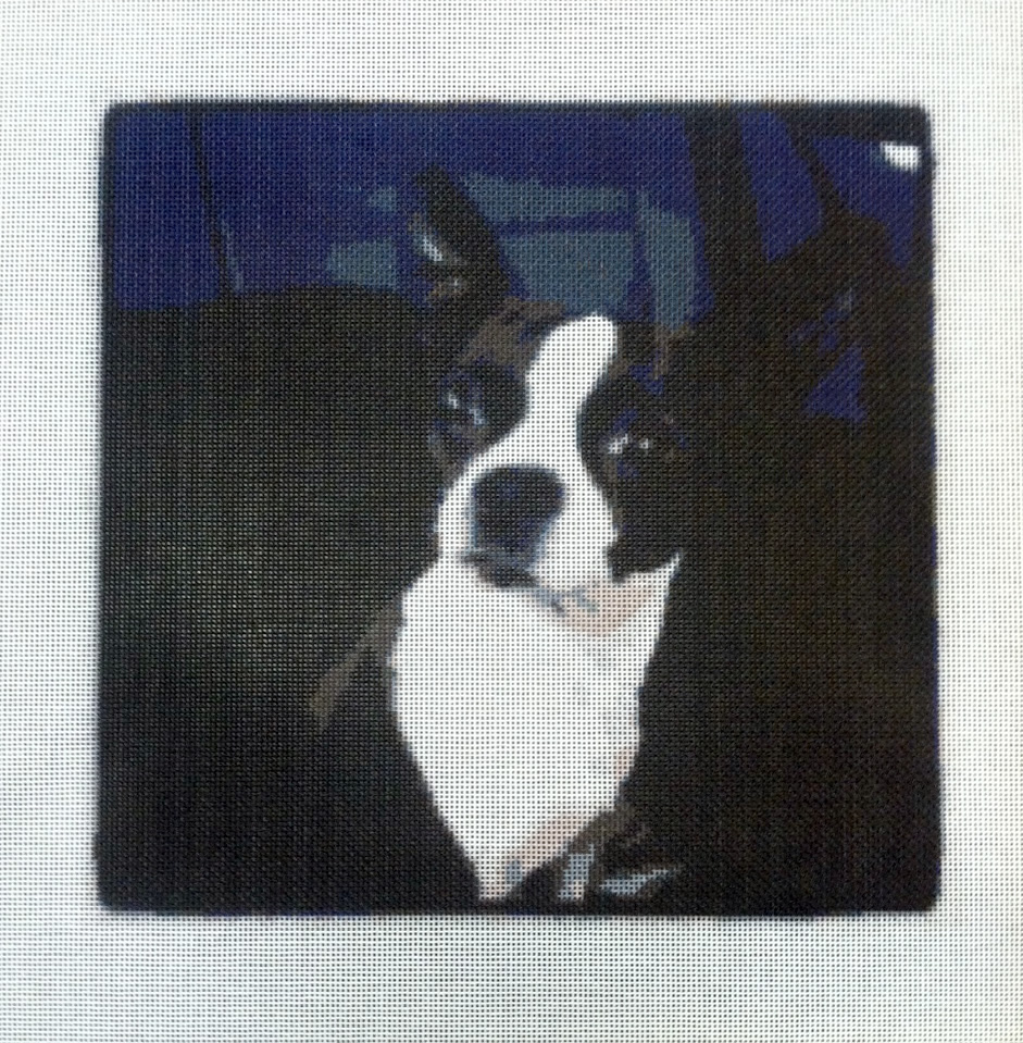 Cool Dog Needlepoint Canvas from Instagram