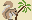 Squirrel with Palm Tree