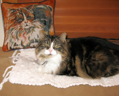 Wonderful Custom Needlepoint Cat Pillow