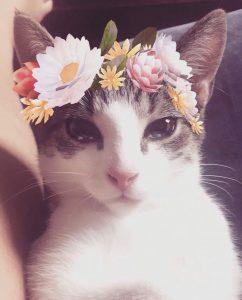 original cat image