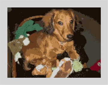 Dachshund Needlepoint Kit
