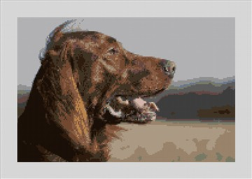 Irish Setter Needlepoint Canvas