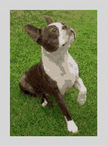 Boston Terrier Needlepoint Canvas