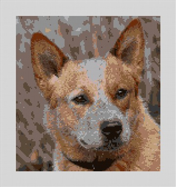 Australian Cattle Dog Needlepoint Canvas