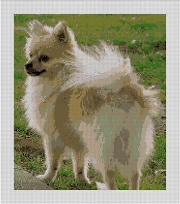 Pomeranian Needlepoint Canvas