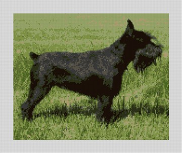 Black Schnauzer Needlepoint Kit